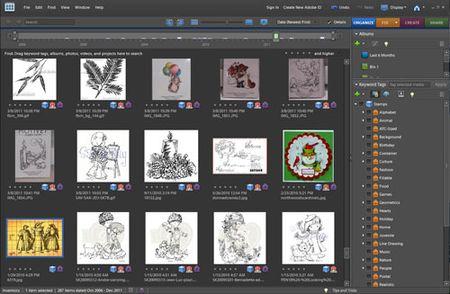 Stamporganization1-web