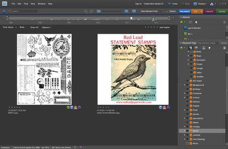 Stamporganization4-web