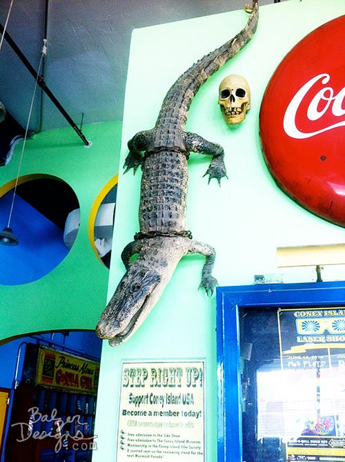 Alligator-wm