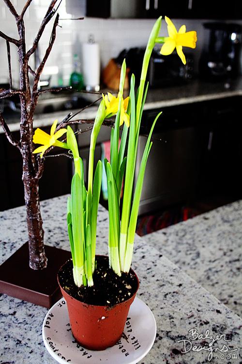 Daffodil-wm
