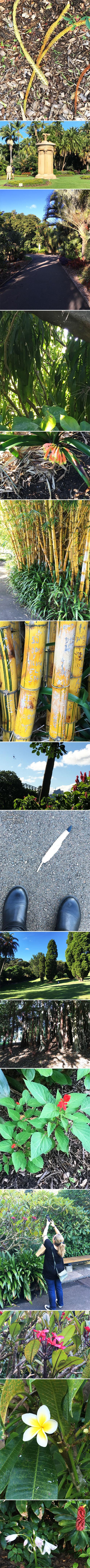 From the Balzer Designs Blog: Sydney Botanic Gardens