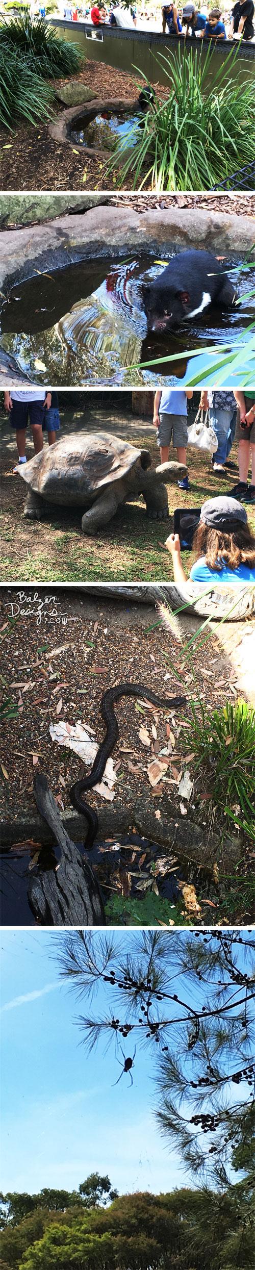 From the Balzer Designs Blog: Australian Reptile Park