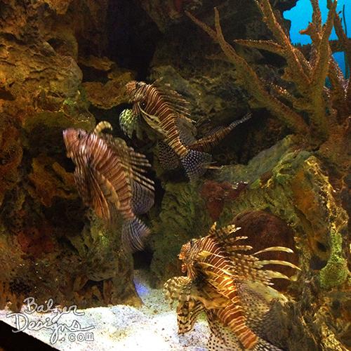 Poisonfish-wm
