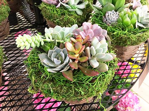 Succulents-sm