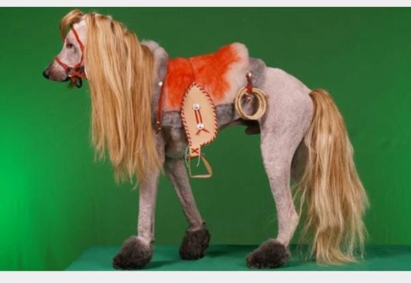 Oenskede-sig-pony_-men-fik-en-puddel-300x207@2x
