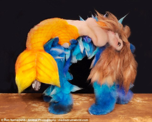 Extreme-dog-grooming