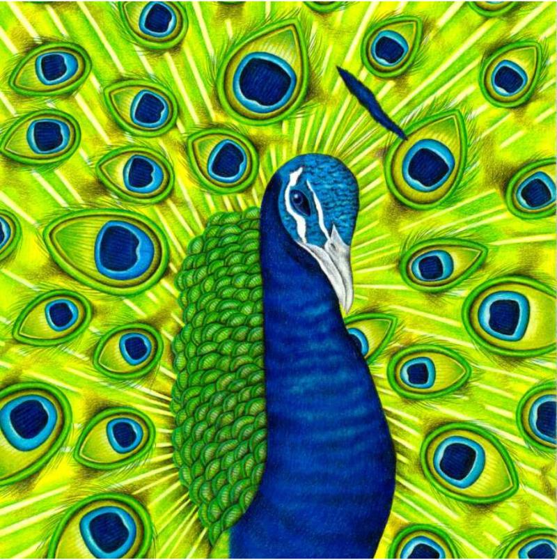 PeacockinParadise